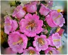 Cores da natureza. #flores #flowers #florzinha #florzinhalinda #naturalbeauty #natureza #naturephotography #jardim #floreslindas #floramarela #revistaxapury #eunotg #criacaodedeus #obradivina #instaflowers #instaflores #motox2 #instamotox2 #garden #floric (ederrabello2014) Tags: naturalbeauty naturephotography instalike flores jardim motox2 intagrambrasil floramarela garden florzinhalinda flowersbouquet revistaxapury flowerslovers instaflores eunotg floricultura instamotox2 florzinha flowerstagram natureza floreslindas instaflowers criacaodedeus intagram obradivina flowersofinstagram flowers