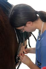 Nica (Montgomery Area Nontraditional Equestrians (MANE)) Tags: al mane pikeroad