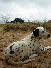 dlmata (polameji) Tags: dog house beach uruguay casa seaside cottage playa perro rancho juncos cabopolonio rocha polonio dlmata polameji