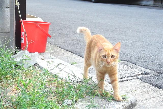 Today's Cat@2010-09-01