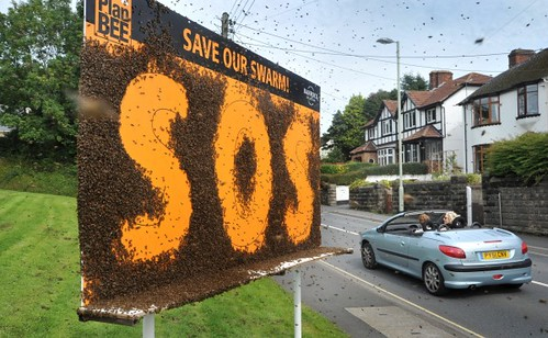 Save_our_swarm_1
