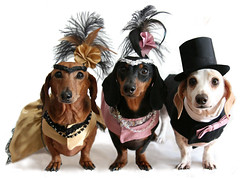 Moulin Rouge Doxies (geckoam) Tags: dog rouge pepper top feather dachshund tuxedo mocha bow levi piebald teckel pinkdress doxie black red rouge wiener dog dress pink dog tie top 1920s dachshund gold costume hat outfit moulin sausage 20sdress feather feathers dachshund 1920s tuxedo tux piebald