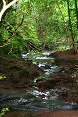 wald in der nhe von Kordel (Dany Morgens) Tags: water wasser hike bach trail wanderweg brgge kordel butzbachtal