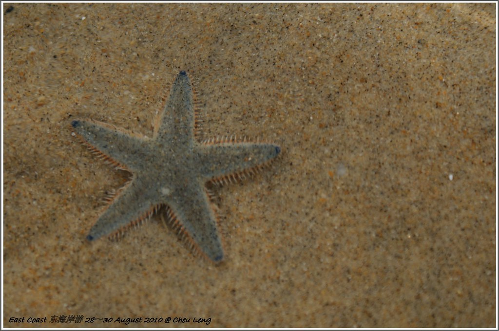 Star Fish at Cherating