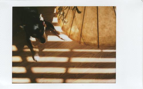Charlie Parasol Sunlight Still Life