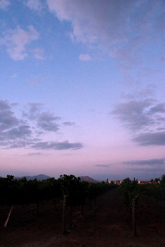 the vineyard at dusk