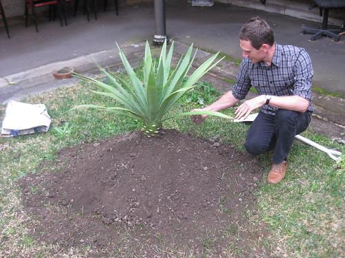 jack's agave arrives