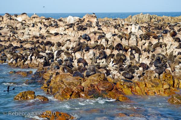 RYALE_Cape_Town-290