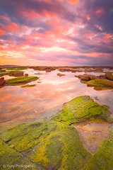 Long Reef Sunrise (-yury-) Tags: ocean beach water sunrise sydney australia longreef