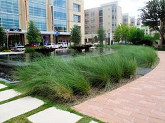 Landscaping edging the village green at CityCentre Houston (peterlfrench) Tags: urban retail canon office texas realestate houston september projects uli houstontexas 2010 developments newurbanism mixeduse multifamily g10 img1740 pfrench99 plnz livingurbanism peterlfrench