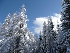 Lussari - 21 (Cristiano De March) Tags: mountain snow day neve montagna sci tarvisio cristianodemarch pwwinter