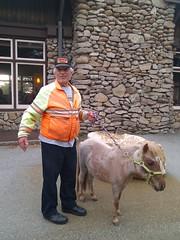 FDG pony