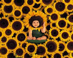 [Free Image] People, Children, Babys, Sunflower, 201106021300
