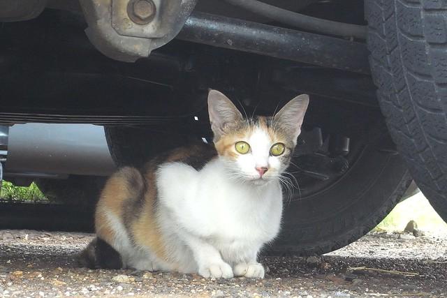Today's Cat@2010-09-11