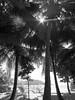 IMG_2025 (l3enjamin) Tags: pictures sun holiday france art topf25 topv111 vacances soleil photo yahoo interestingness topf50 topv555 topv333 topf75 holidays flickr heaven foto image ben photos topv1111 topv999 picture pic images fotos topv seychelles benjamin plage flick indien français paradis îles artistique photographe iles océanindien flickraward geocity camera:make=canon exif:make=canon nantais exif:focal_length=6mm exif:iso_speed=80 geostate geocountrys exif:model=canonpowershots90 camera:model=canonpowershots90 exif:lens=60225mm exif:aperture=ƒ40