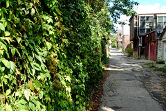 DSC_7249 v2 (collations) Tags: toronto ontario documentary laneways alleys lanes alleyways