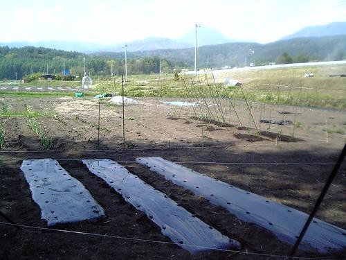 畑植え付け後07.5.24 by Poran111