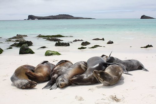 galapagos-photos
