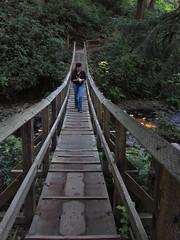 back across the bouncy (carolyn_in_oregon) Tags: oregon carolyn pacificocean suspensionbridge oswaldweststatepark shortsandsbeach