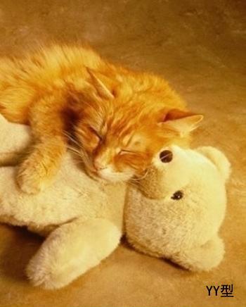 貓的睡姿01