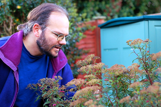 Wulf in the garden, trying to identify a plant