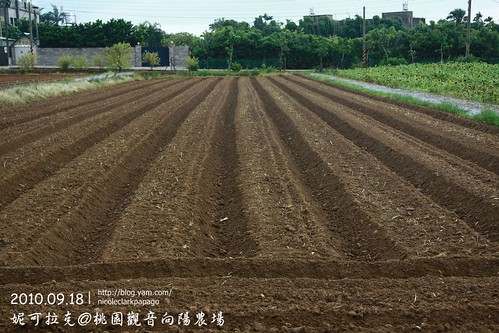 桃園觀音向陽農場20100918-093