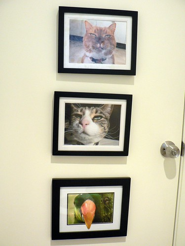 Pets mug shots behind the toilet door