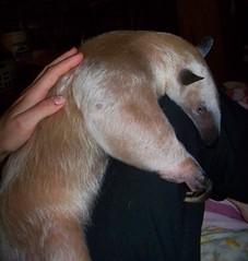 Pua snuggles