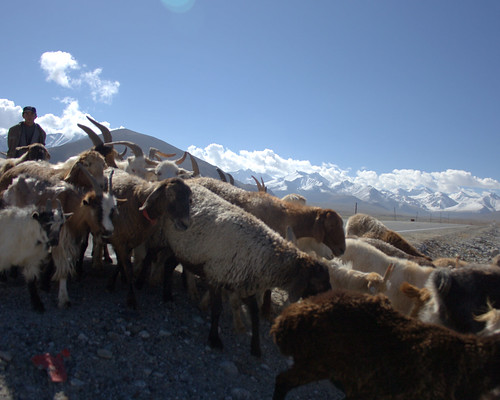 Goats on the Karakoram Highway
