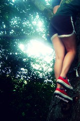 I climbed a tree! (DelightedAcquaintance) Tags: sun tree fall nature public girl leaves fun climb jump day play legs branches adventure climbing story fate bark converse allstar tomboy sunflare manboys wowthisisalotoftags