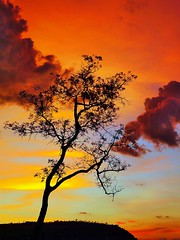 Silhouette tree (JC Patricio Photography) Tags: sunset pordosol brazil tree colors silhouette brasil cores brazilian cerrado savannah brasileiro matogrosso silhueta rondonpolis theunforgettablepictures jcpatricio rodoviadopeixe tripleniceshot mygearandmesilver mygearandmeplatinum mygearandmediamond tplringexcellence aboveandbeyondlevel1