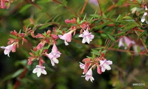 fotos de plantas y flores