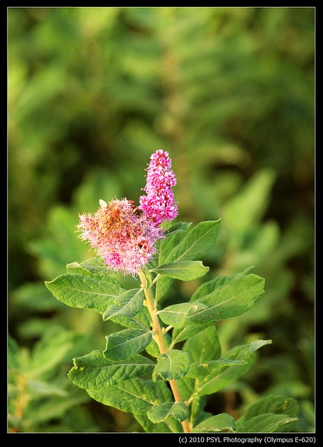 Unknown flowering plant