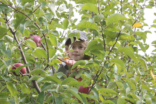 applepicking10-9