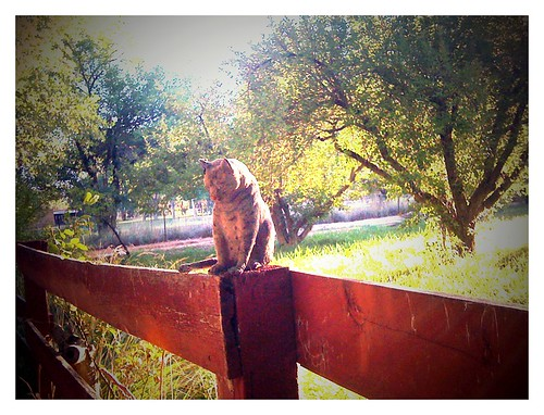 cat on the fence
