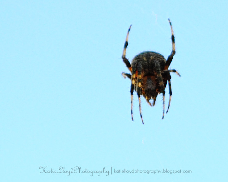 Spider-up-close---wm