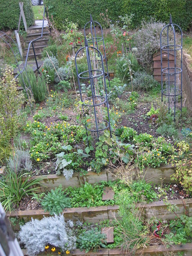 Veg bed 1 Oct 2010