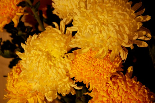 flori, mandre flori