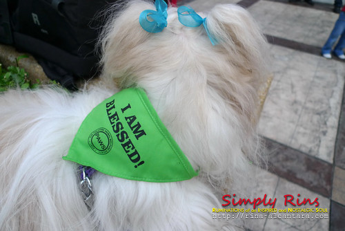 Pet Blessing at Eastwood City 09
