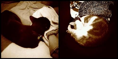 sepia cats