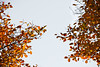 Trees speaking in colours of autumn (UdePics) Tags: autumn trees sky brown fall leaves yellow finland leaf helsinki foliage 秋 木 edit フィンランド 茶色 ヘルシンキ 黄色い