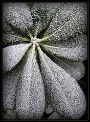 frio (Julio Codesal) Tags: macro weather valladolid julio frio codesal helada meteorologia eltiempo meteoros fenomenosadmosfricos juliocodesal