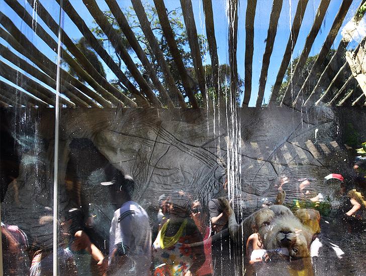 soteropoli.com fotografia fotos de salvador bahia brasil brazil 2010 zoo zoologico by tuniso (8)