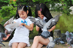 Hard feeding (kagechiyo.) Tags: bird girl japan children kyoto child pigeon