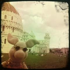 Ferkel auf der Wunderwiese in Pisa