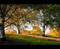 Herbstliche Parklandschaft (Sam ) Tags: park autumn canon season landscape sam herbst jahreszeit luxembourg landschaft luxemburg echternach rockpaper daarklands ringexcellence tplringexcellence