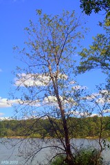 Natural Lace and Sky (Irina Kiseleva) Tags: blue trees sky white lake green nature water colors clouds abigfave