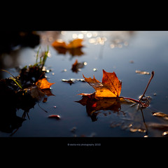 "sinked ""boat"" (stella-mia) Tags: autumn sunset sun fall water yellow norway 50mm leaf dof bokeh explore yellowleaf hightlight explored leafinwater canon5dmkii"