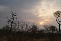Sunrise at Kruger National Park, South Africa