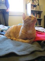 IMG_8508 (senkatnovo) Tags: sweater yarn unraveling